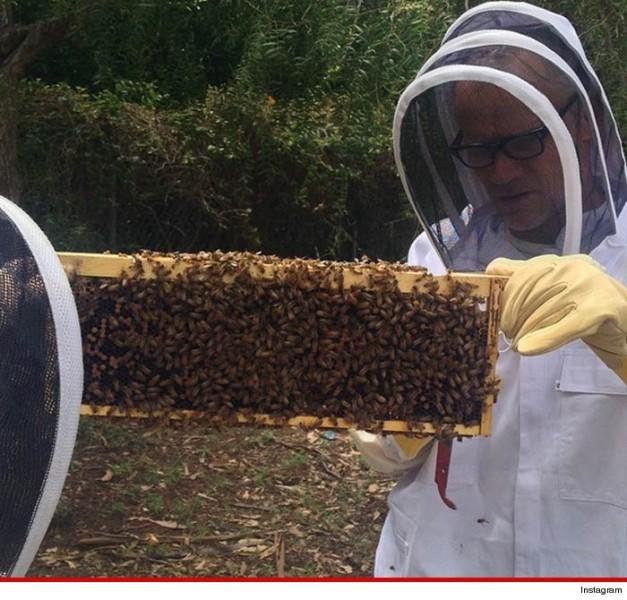 Flea bees 1