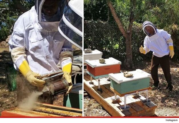 Flea bees 2