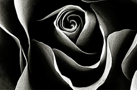 Sophie Lancaster Rose